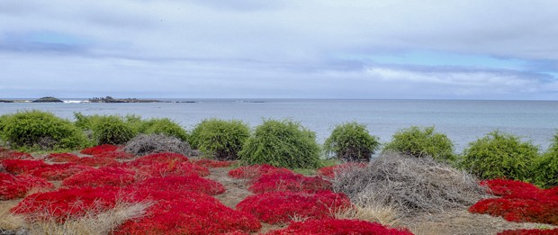 Shoreline with red ground cover and dollops of green bushes lining the shore with the ocean and small rocky flats.