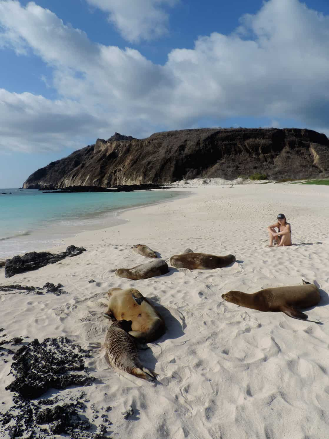 Traveler sitting on a sandy beach with sleeping sea lions splayed out in front of her.