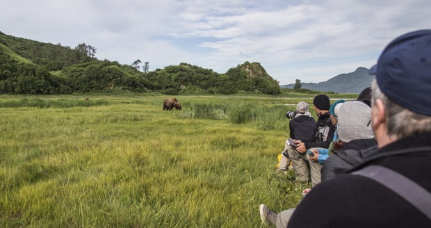 Guests on a land tour viewing and taking pictures of a grizzly bear in a field in Katmai Alaska.