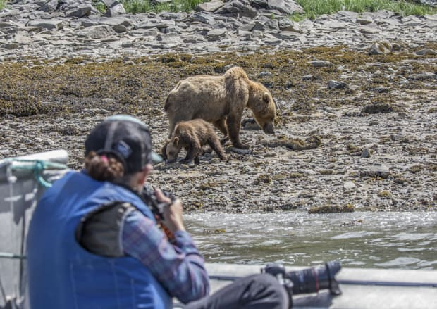 Guest from a small ship in Katmai Alaska taking pictures from a skiff of a grizzly bear on shore.