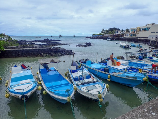 Several small blue boats tied up to the pier in Tortuga Bay.