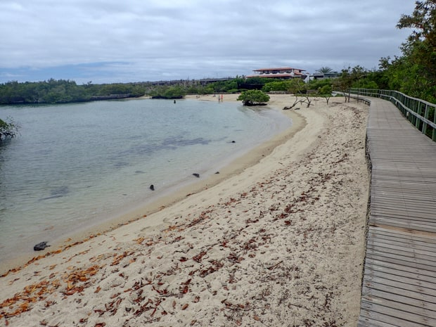 View of shallow water next to a sandy beach and boardwalk in the Galapagos.