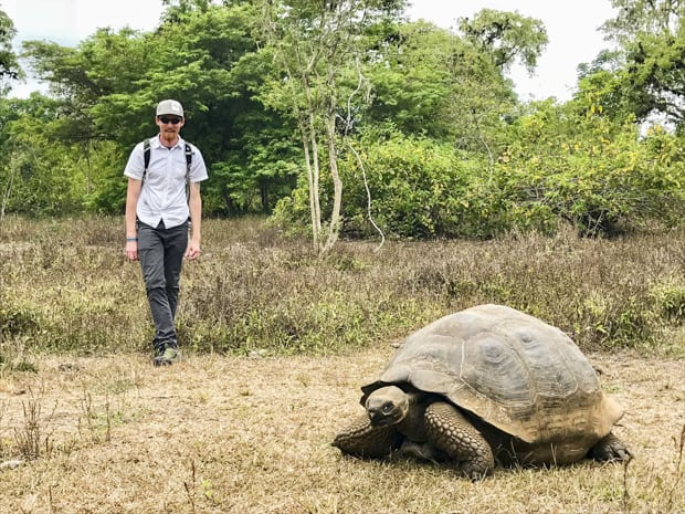 Galapagos tortoise walking in a grassy area with a traveler off to the side.