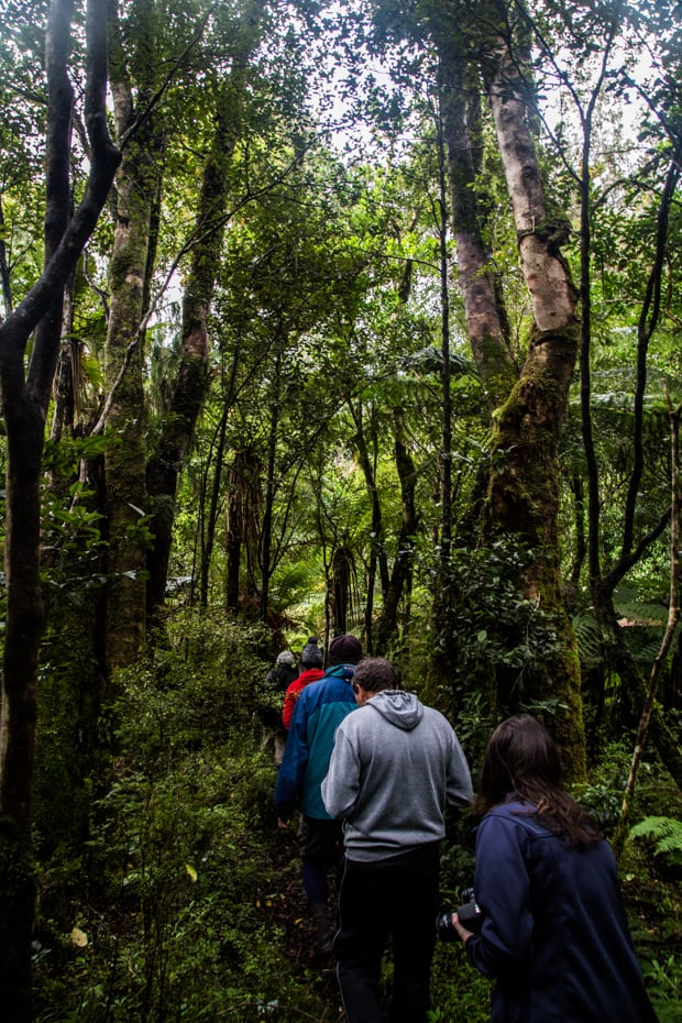 Guests from a small ship cruise hiking through a forest in New Zealand.