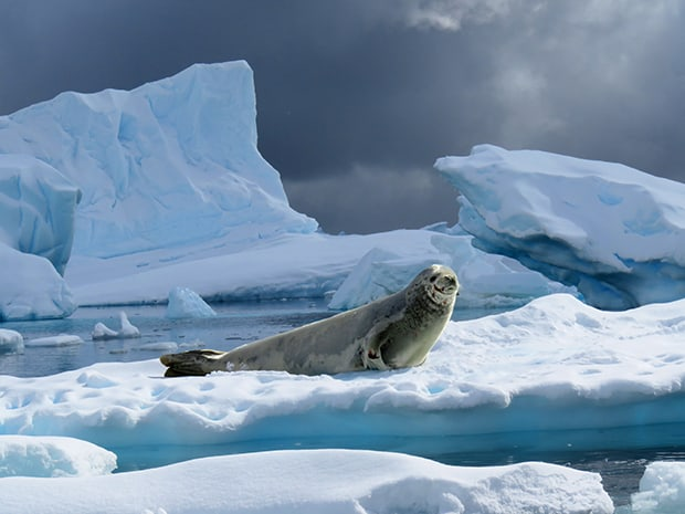 Seal on an iceberg seen from a small ship in Antarctica