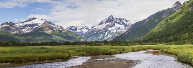 Grizzly bear in stream in front of mountain range in Katmai Alaska.