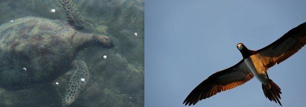 An Australian turtle and bird