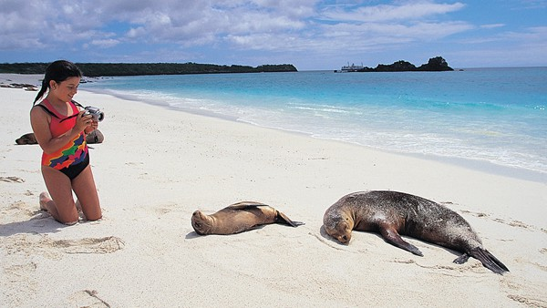 Young girl on a beach with sleeping Galapagos sea lions