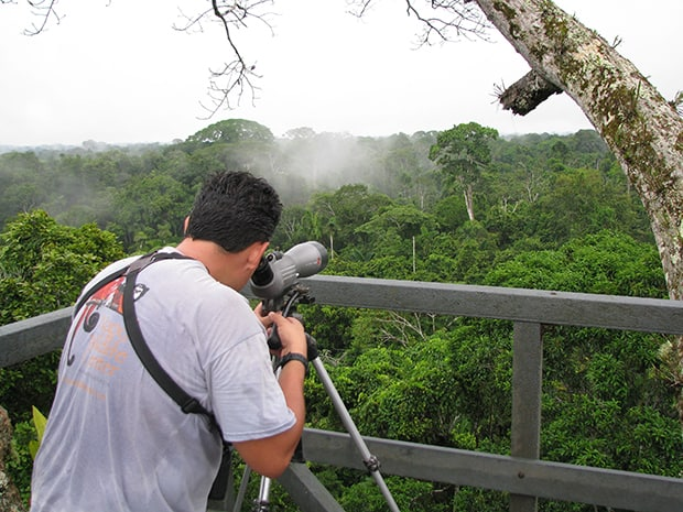 Man on a birding tour from a jungle lodge in the Amazon looks through binoculars on a platform above the jungle canopy.