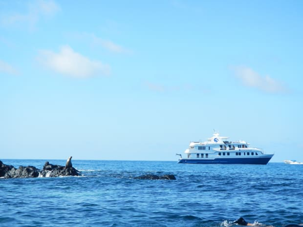 Sea lion perched on a rock in the water with a small ship cruise in the Galapagos.