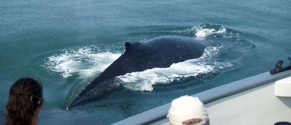 Humpback whale up close to a small ship in Frederick Sound Alaska with guests looking from the deck.
