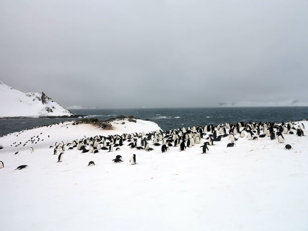 A group of penguins on the snow on shore in Antarctica on a cloudy day