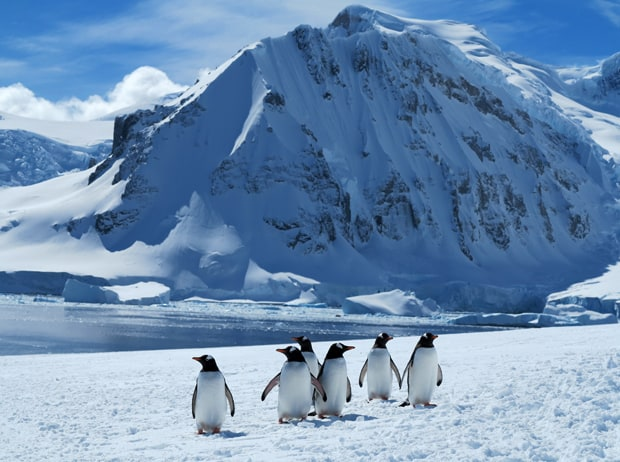 group of penguins in the foreground and an Antarctic mountain in the background