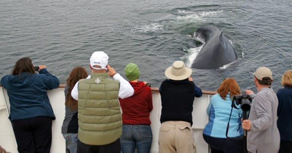 Guests on the bow of a small ship whale watching in Point Adolphus Alaska with a whale next to the boat.
