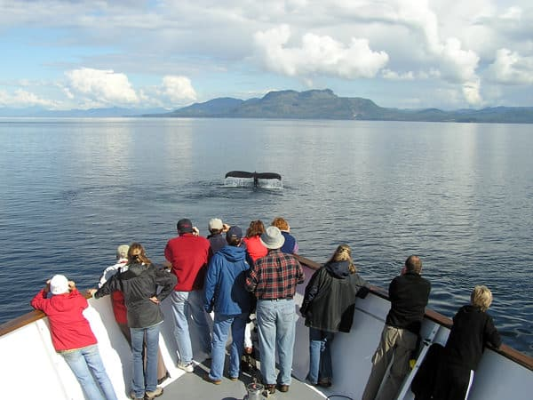 Guests on the bow of a small ship cruise in Alaska whale watching and taking pictures of a whale tale in front of the bow.
