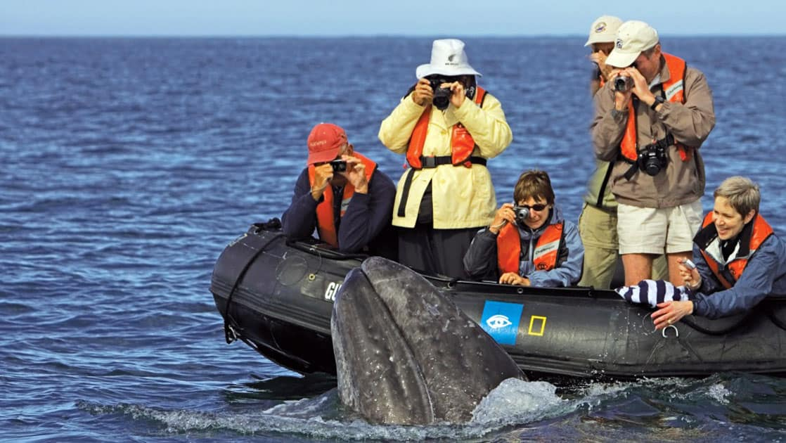 Baja travelers on a skiff taking a picture of a grey whale in baja