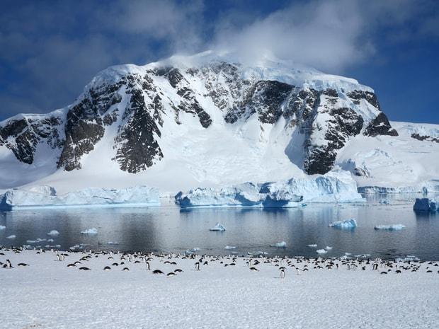 Penguins seen on a Danco Island excursion off a small ship in Antarctica.