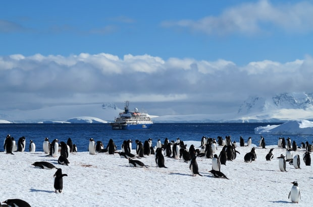 Penguins seen on a land tour to Cuverville island with small ship in background.