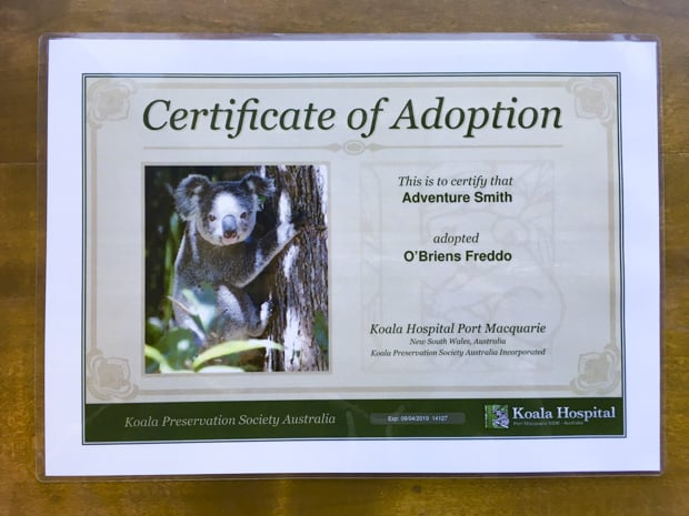 A certificate of adoption for a koala