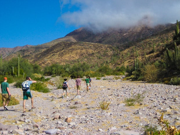 A group of travelers hike along the rocky ground heading toward Baja cacti and a mountain.