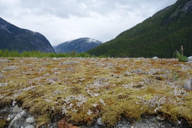 Landscape near the Baird Glacier in ALaska.