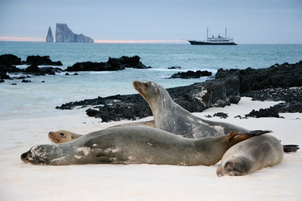 Galapagos sea lions on the shore in front of Kicker Rock and a small ship