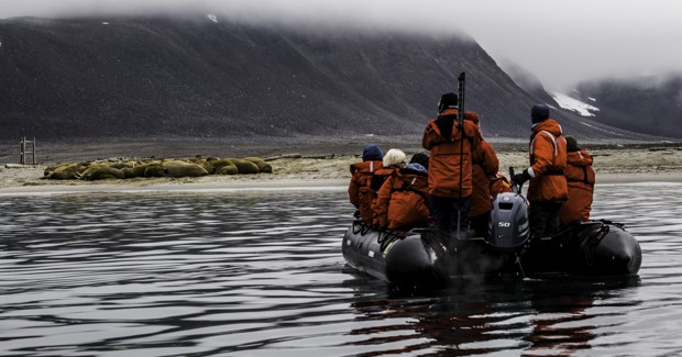 A group of travelers looking at Arctic animals from a Zodiac