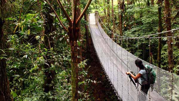 traveler standing on a bridge in the Costa Rican jungle