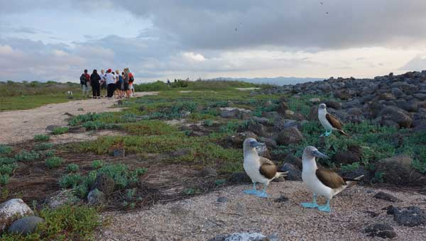 Two blue-footed booby birds stand in the foreground dirt with a group of Galapagos travelers behind them