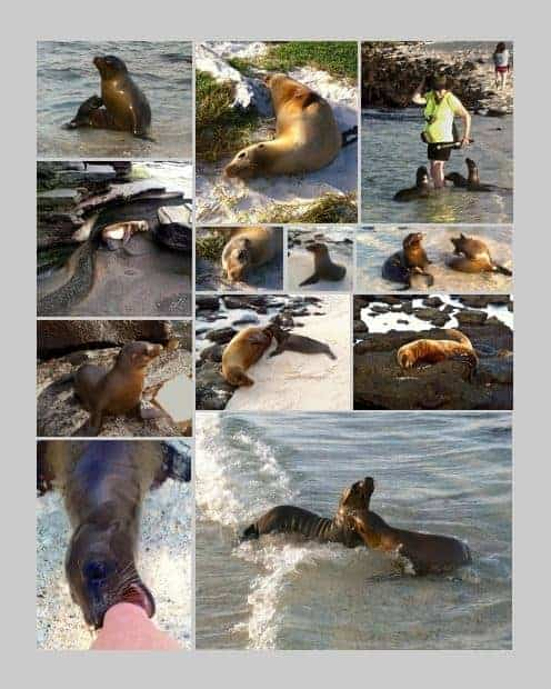 Collage of photos from the beach in the Galapagos and getting up close to many sea lions.