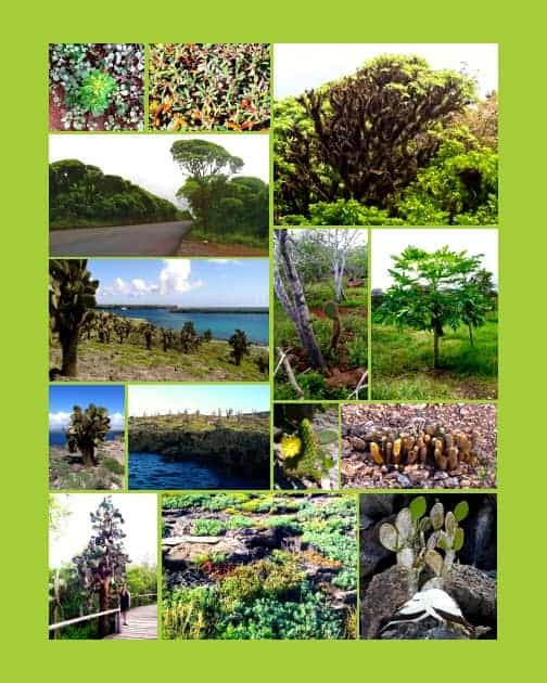 Collage of plants and greenery seen while on their small ship Galapagos cruise.