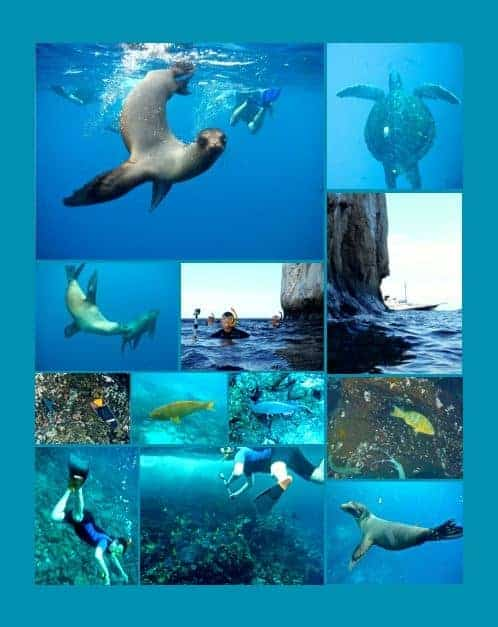 Collage of underwater photos while snorkeling from a small ship cruise in the Galapagos including turtles, sea lions, fish, coral, and rock formations.