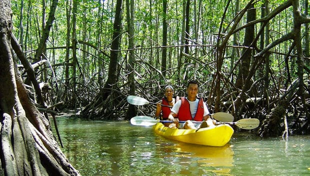 Costa Rican travelers kayaking on a river through a rainforest.