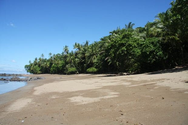 A sandy beach along side the Costa Rican jungle.