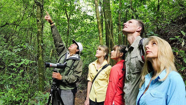 Costa Rican travelers and guide observing from a trail in the rainforest.