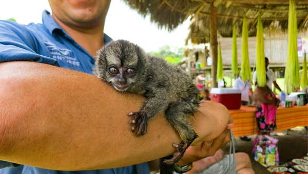Small grey monkey with wild eyes sits on a man's forearm, seen during a Panama family vacation.