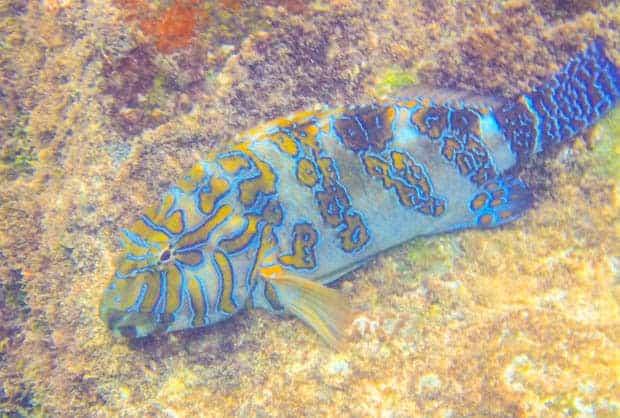 Beautiful colorful fish swimming on the ocean floor.