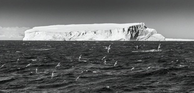 Black and white shot of birds flying in front of an iceberg in Antarctica.