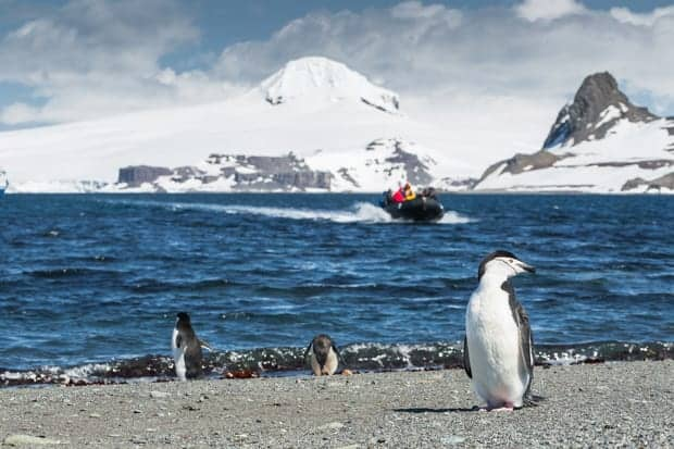 Penguins on the beach with a skiff in the background in Antarctica.