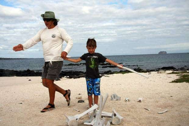 Galapagos guide and small child on a beach looking at a animal skeleton on a beach.