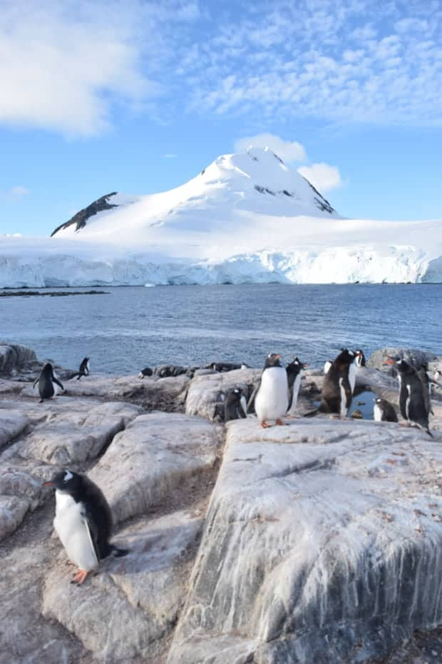 Penguins on rocks with snowy mountain of Antarctica in the background.