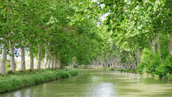 Calm tree-lined river with bright green foliage and grass on a sunny day during a Northern Europe tour.