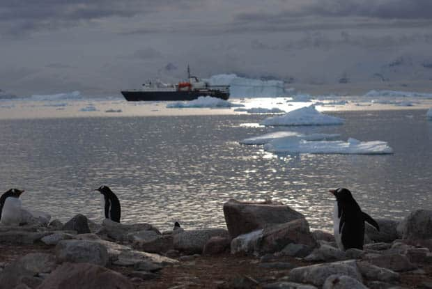 Penguins on the beach in Antarctica with a small expedition cruise ship in background.