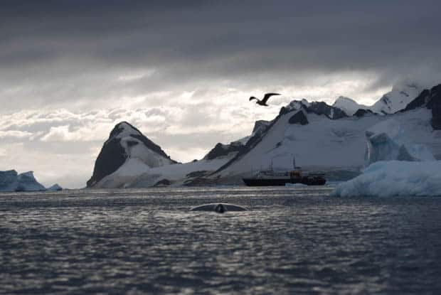 Snowy mountains and a bird flying seen from a small ship cruise in Antarctica.