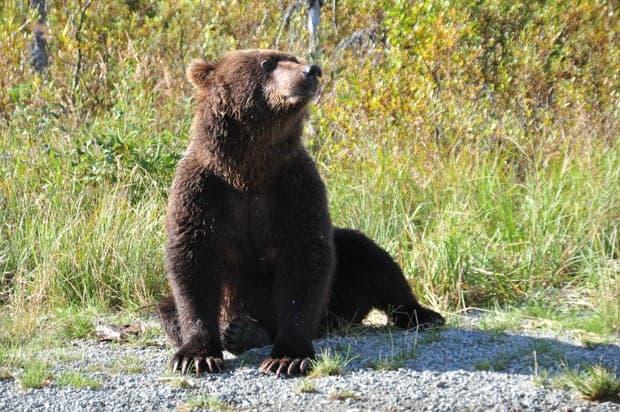 Small black bear cub sitting on a rocky shoreline.