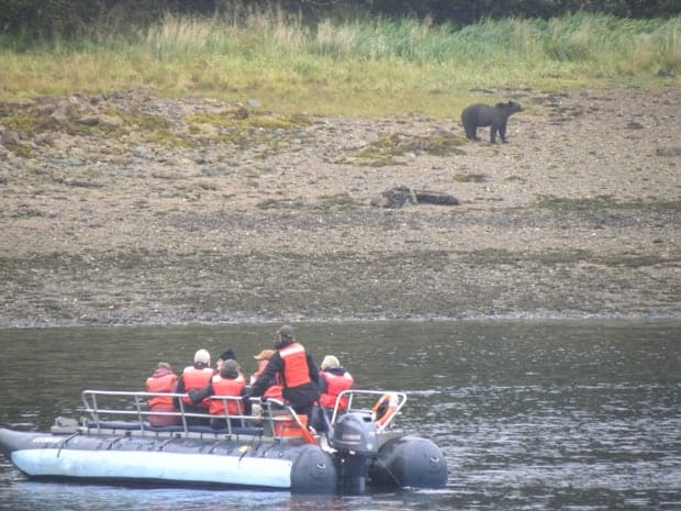 Group of small ship travelers observing a black bear on the shoreline in Alaska from the zodiac.