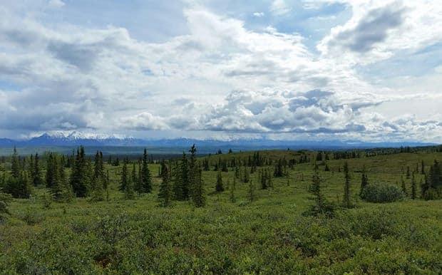 Denali tundra with Alaskan mountain range on a cloudy day.