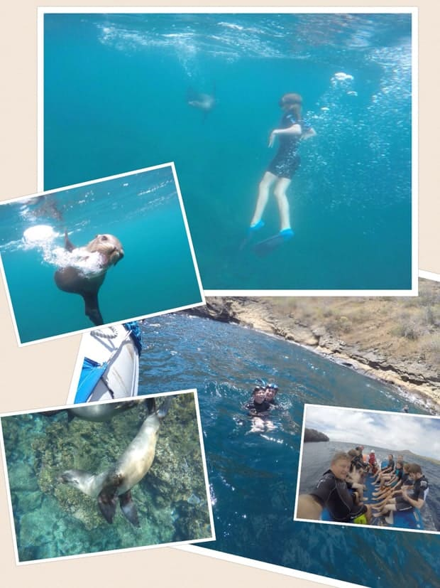 collage showing a girl swimming with a sunfish, a galapagos sea lion, snorkeling and group of travelers on a skiff