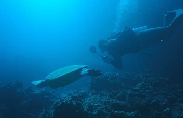 Traveler scuba diving in the Galapagos following a sea turtle.