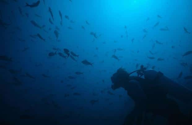 Traveler scuba diving in the blue ocean waters with small fish swimming all around in the Galapagos.